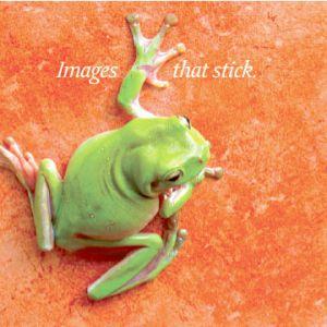 c75-frog.jpg