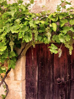 c53-Grapes-over-door.jpg